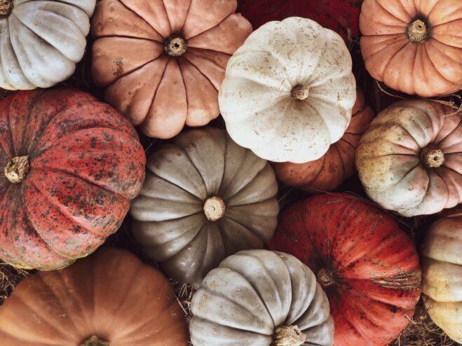 Fall Festival Pumpkin Patch Southern Hill Farms