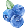 Blueberry u-pick at Southern Hill Farms in Clermont, FL.
