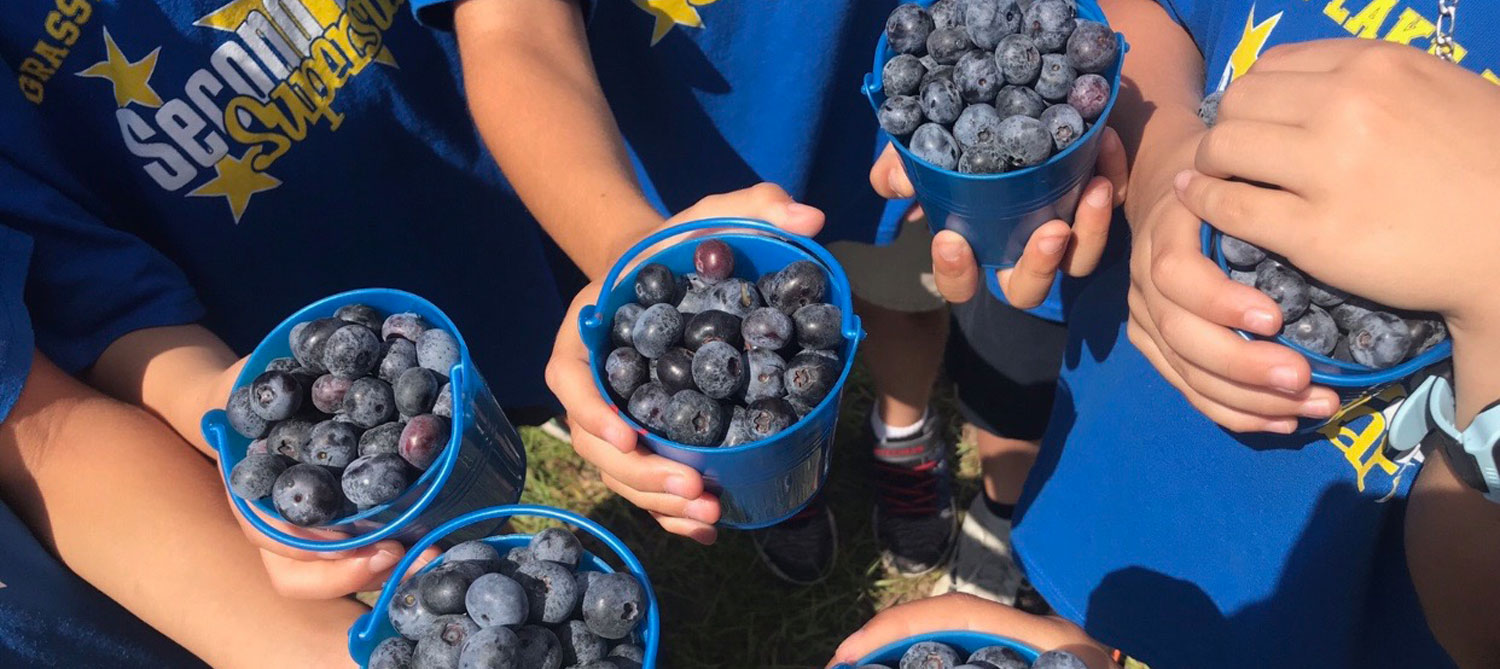 Southern Hill Farms Blueberry U-Pick in Clermont FL